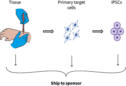 Cells can be shipped at multiple stages
