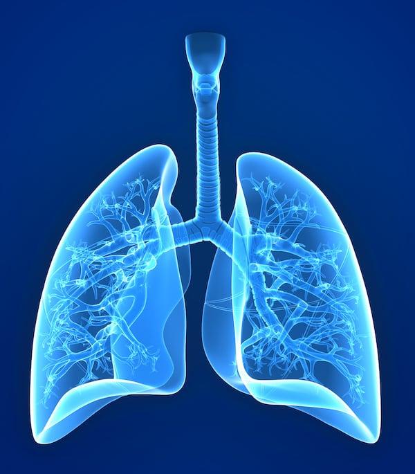 lungs-rendering